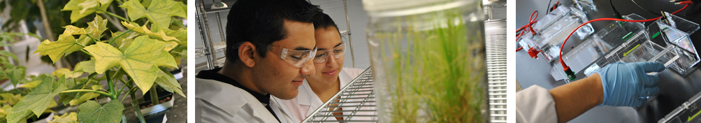 Plant leaves, Students in lab, Experiments