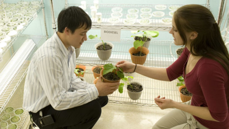 Students examine plants involved in biofuels research
